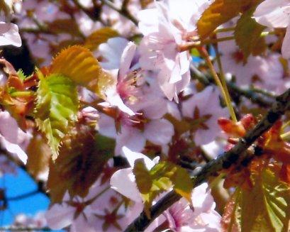 blommorvår