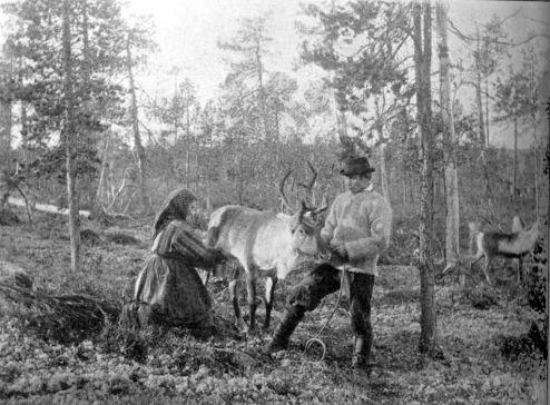 1024px-Reindeer_milking